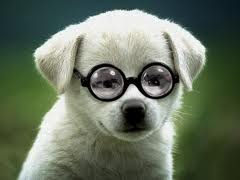 glasses for people and puppies